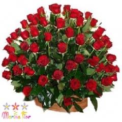 Fantasia Rosas Rojas
