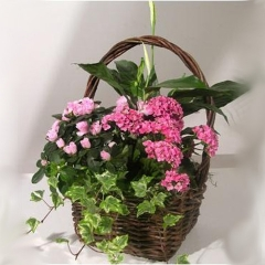 Canasta Flores y Plantas Básica