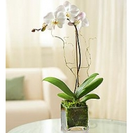 Orquidea en base