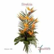 Sterlitzia